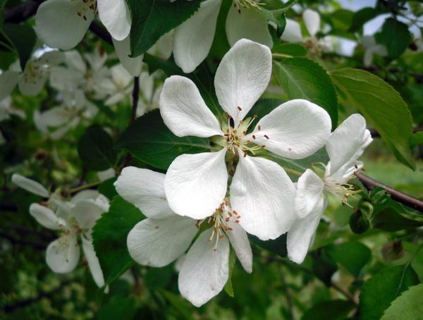 Конец мая - еще цветут сады