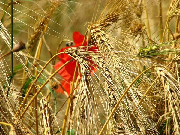 На Дорофея, по поверью, предки навещают живых, воплощаясь в цветах и растениях