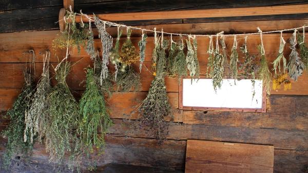 Время сушить целебные травы