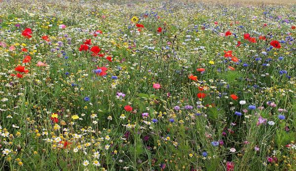 Цветущий луг: кому-то красота, а кому-то - аллергия...