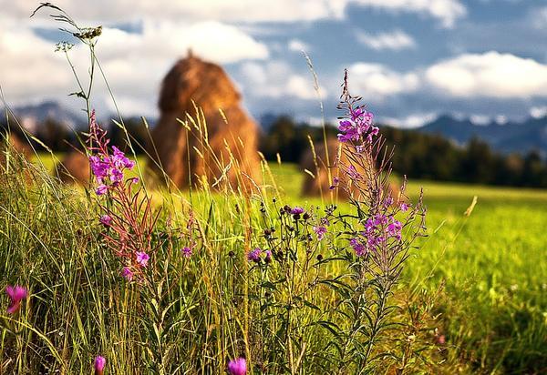 Пришла пора сенокоса и сбора целебных трав