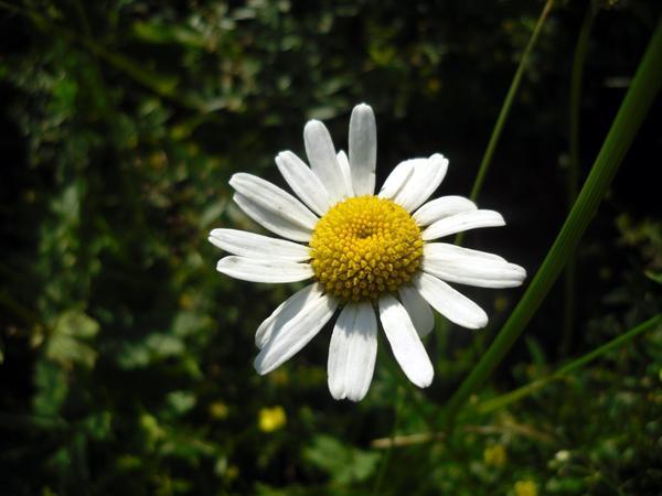 Прежде чем сорвать любое растение, следовало испросить благословения Матери-Земли