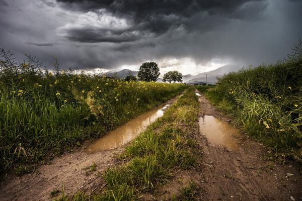 Кириков день всегда сырой, с дождями