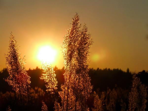 Золотистое небо на закате предвещает хорошую погоду