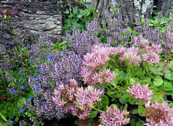 Там, где пару лет назад еще рос бурьян, теперь распускаются цветы