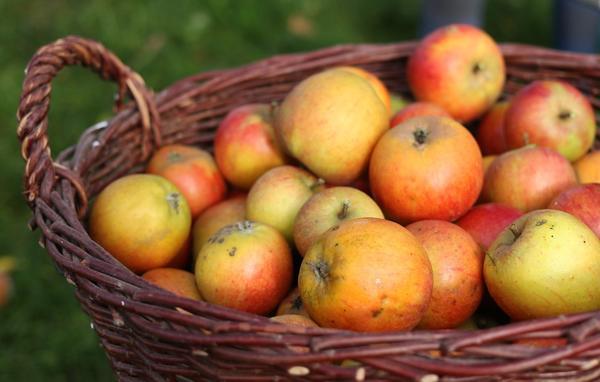 Пришел Яблочный Спас
