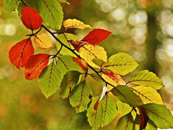 Листья уже начинают менять цвет и облетать