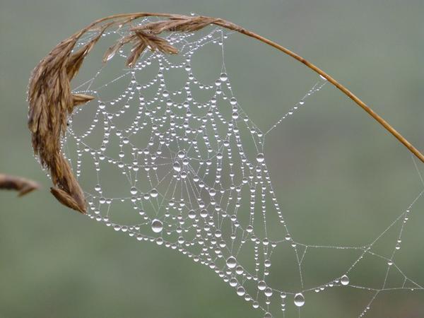 Если на бабье лето много паутины, зима придет ясная, но холодная
