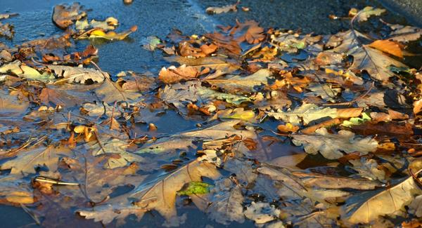Пришла пора дождей и листопада