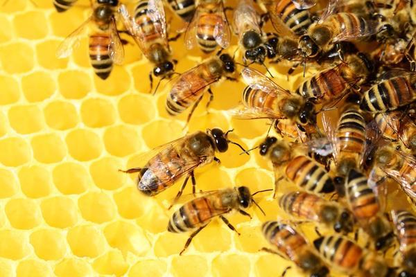 Зосима и Савватий - пчелиные заступники