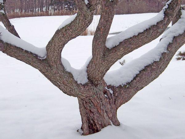 Сезонные работы в саду и огороде: конец января – начало февраля