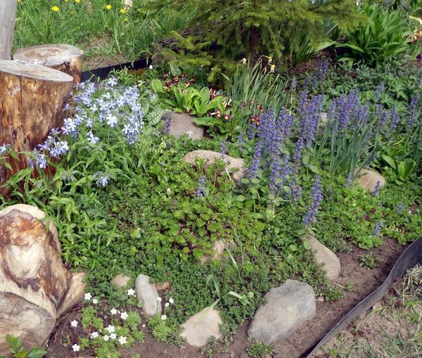 Почвопокровные растения в цветнике