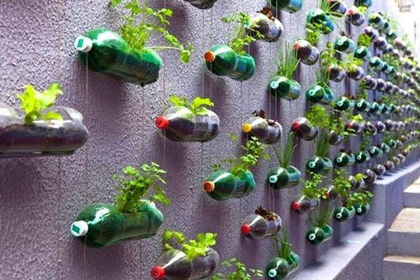 Вертикальное озеленение при помощи контейнеров из пластиковых бутылок. Фото с сайта koffkindom.ru
