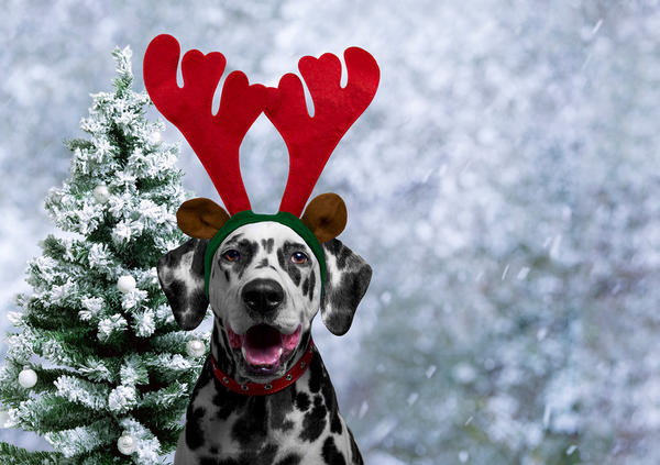 Ответственную роль рождественского оленя можно поручить домашнему питомцу