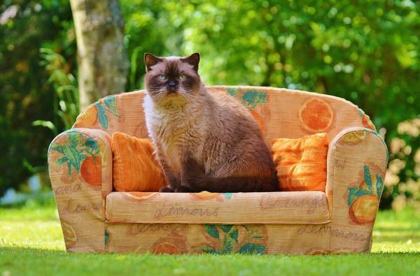 Наверное, все любят комфорт. А кошкам известно о нем больше всех ;)