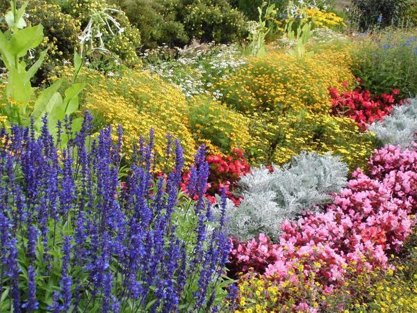 Наверное, каждый дачник мечтает, чтобы цветение в саду не прекращалось весь сезон