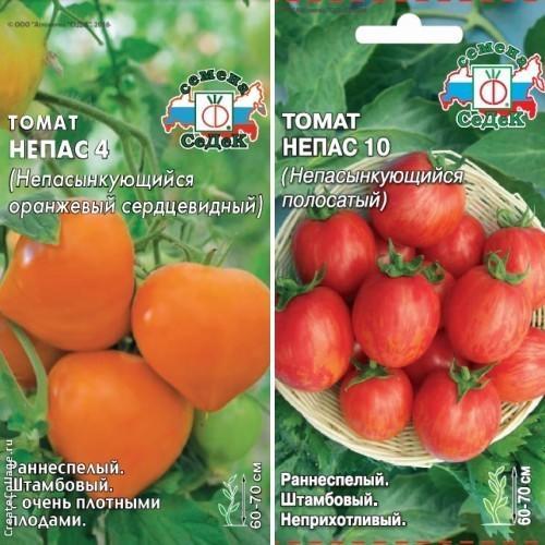 Оригинальные плоды сортов Непас 4 и Непас 10 подходят для консервирования