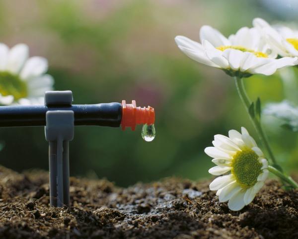 Автоматические системы полива - забота о растениях и экономный расход воды