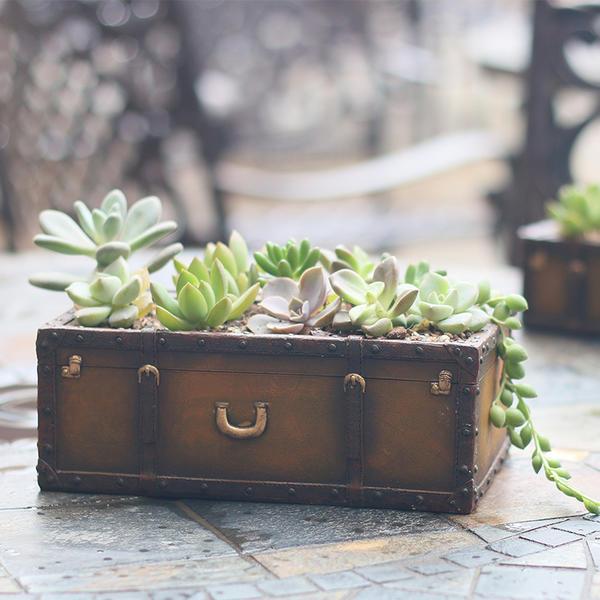 Миниатюрный сад в ретро-чемодане
