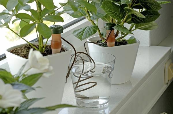Полив автоматический для комнатных растений