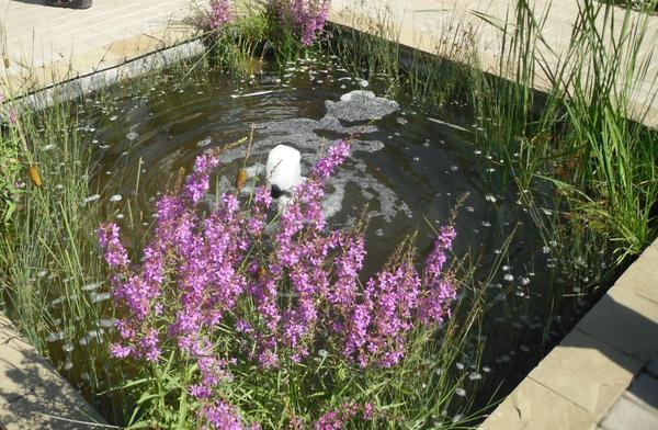 Миниатюрный водоем с фонтанчиком