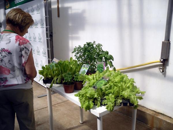 Овощная зелень