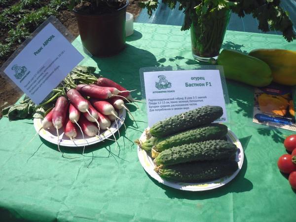 Овощи с полей. Наглядная и убедительная демонстрация качества