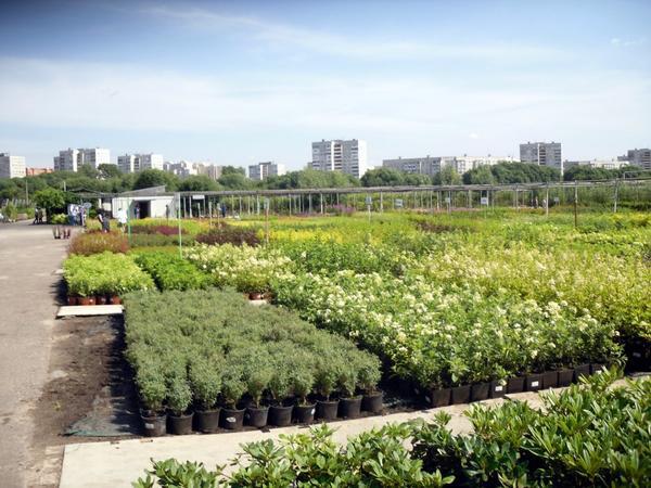 Растения в контейнерах занимают огромные площади