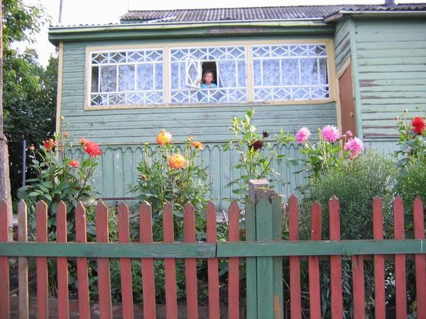 Георгины в деревнях обычно сажают под самыми окнами