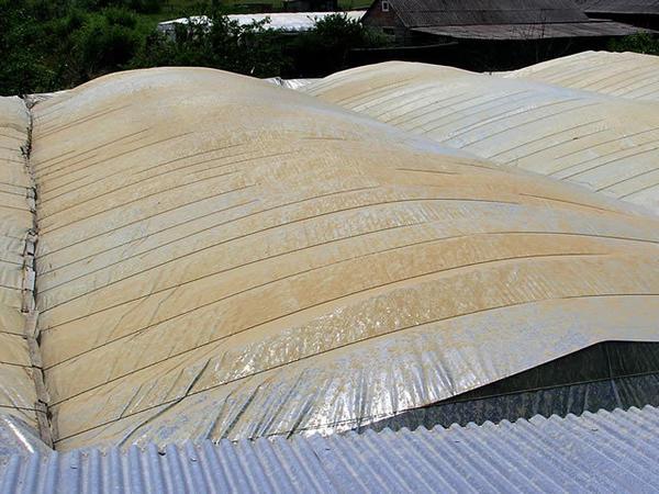 Наступила жара - пленка обрызгивается обычной глиной, которая защищает растения от перегрева. Фото с сайта kurdyumov.ru