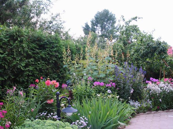 При хорошем уходе флоксы станут настоящим украшением сада