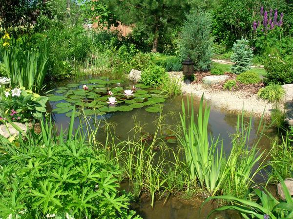 Водоем всегда должен соответствовать саду, строениям и окружающим растениям. Фото Валерии Ильиной