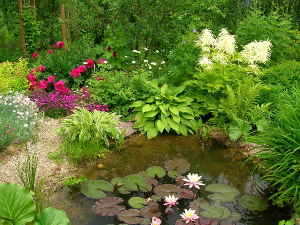 Водоем в саду. Фото Валерии Ильиной