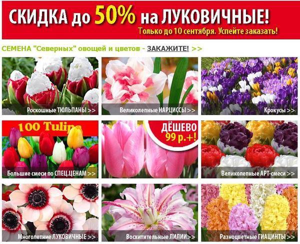Распродажа луковичных в магазине Садовый мир