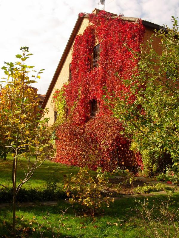 Естественные шторы для стен загородного дома