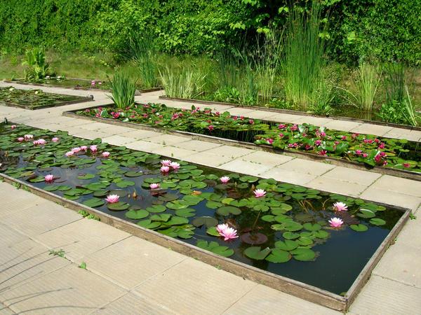 Формальный водоем может быть устроен в виде модулей