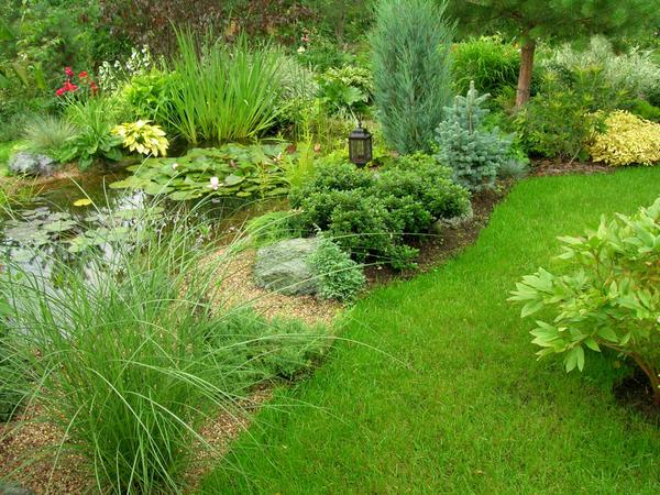 Основная черта пейзажного пруда - естественность