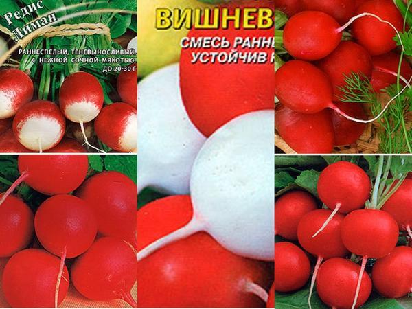 Редис - первые весенние витамины