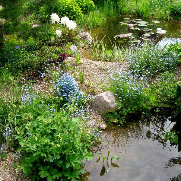 Выбор типа водоема и его стилистики -очень важный этап