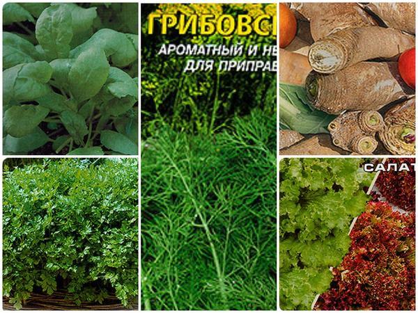 Зелень под зиму - ранний витаминный урожай