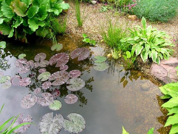 Размещая растения и камни у пруда, стремитесь подражать природе
