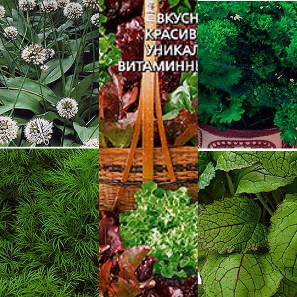 Выбор зелени для подзимнего посева огромен