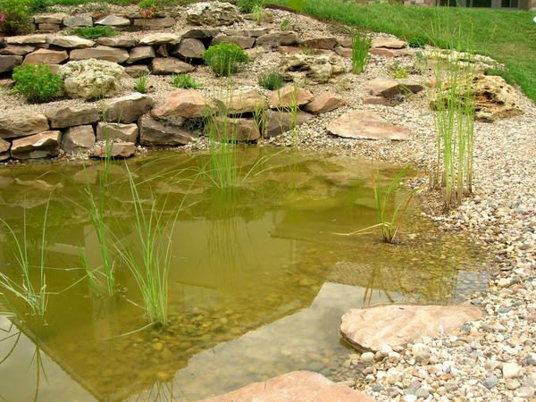 Чем больше пруд, тем быстрее в нем установится биологическое равновесие