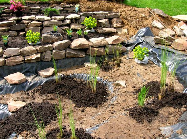 Растения в будущем водоеме высаживаются поэтапно
