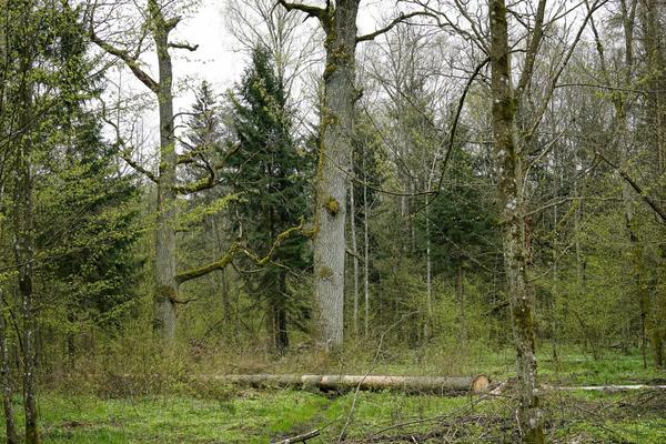 По составу лесной растительности можно делать выводы о климатических и почвенных условия местности