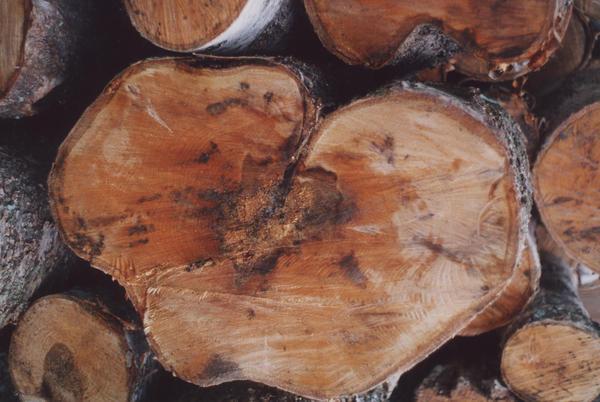 Вместе с дровами можно привезти в сад вредителей и болезни