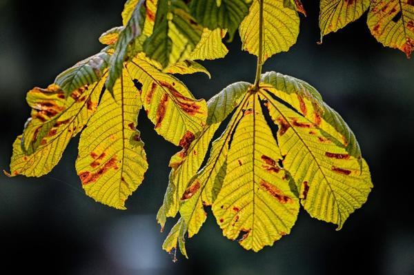 Осень. Время анализировать проблемы