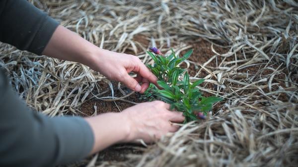 Выбирайте растения, которые будут хорошо расти при минимальном уходе