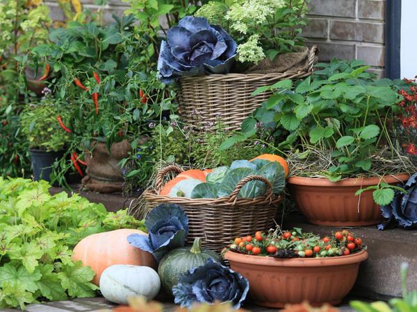 Декоративный огород - модная экзотика