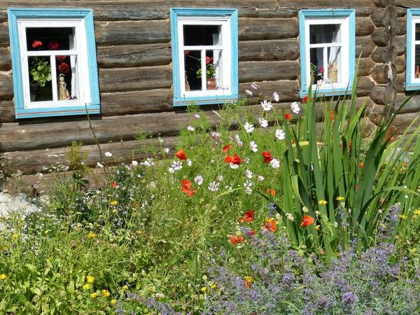 В наших садах сейчас почти не встречаются природные российские растения